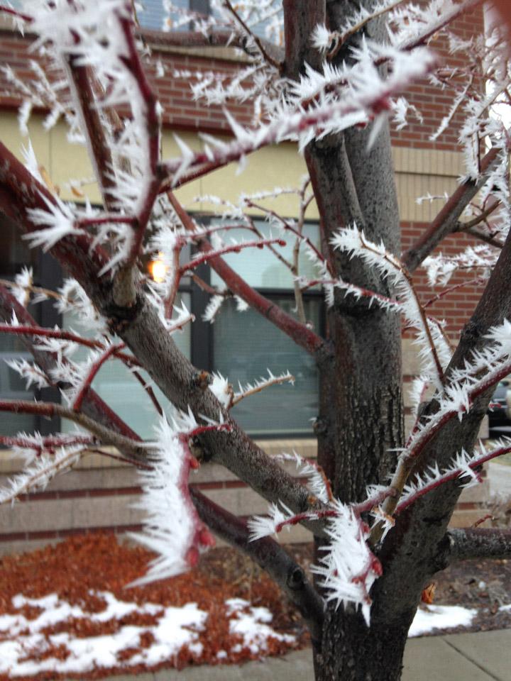 winters edge photo by Joyce Robinson